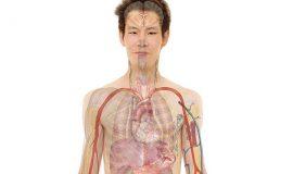 Riabilitazione nelle Broncopneumopatie